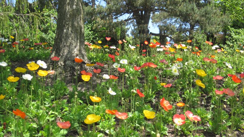 Margarets Nature pics 1 180